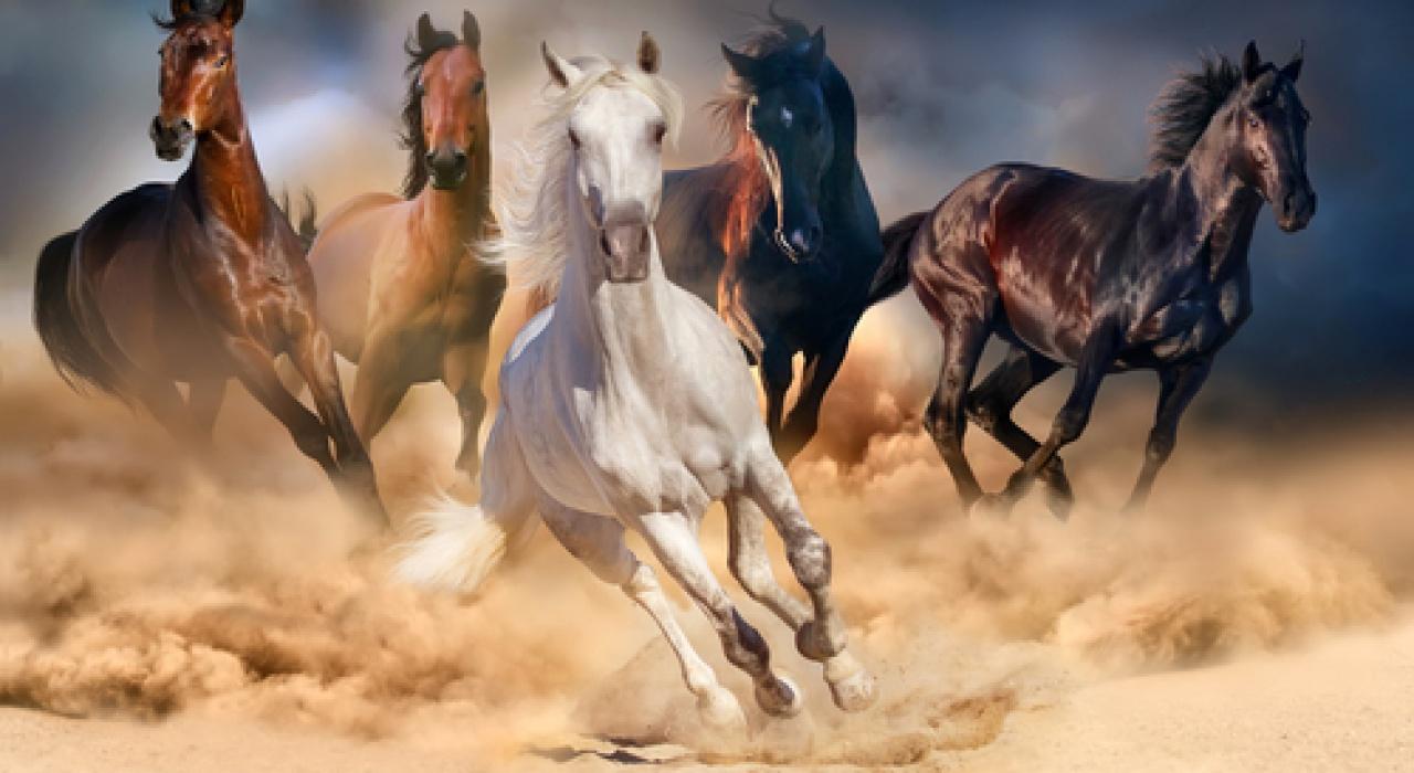 Die Nacht der Pferde – Family Entertainment